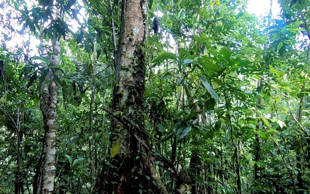 La Selva o Bosque Lluvioso Tropical