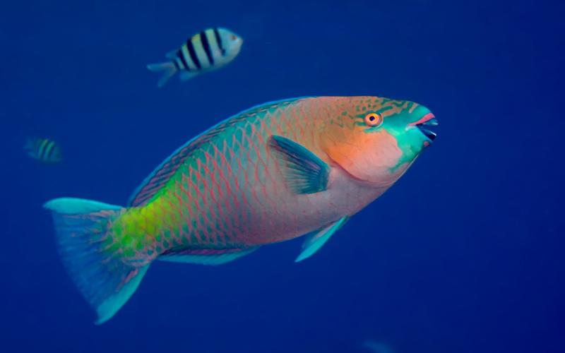 MEDIOAMBIENTE: El pez loro, corales y playas de arenas blancas