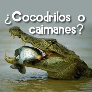 ¿Cocodrilos o caimanes?