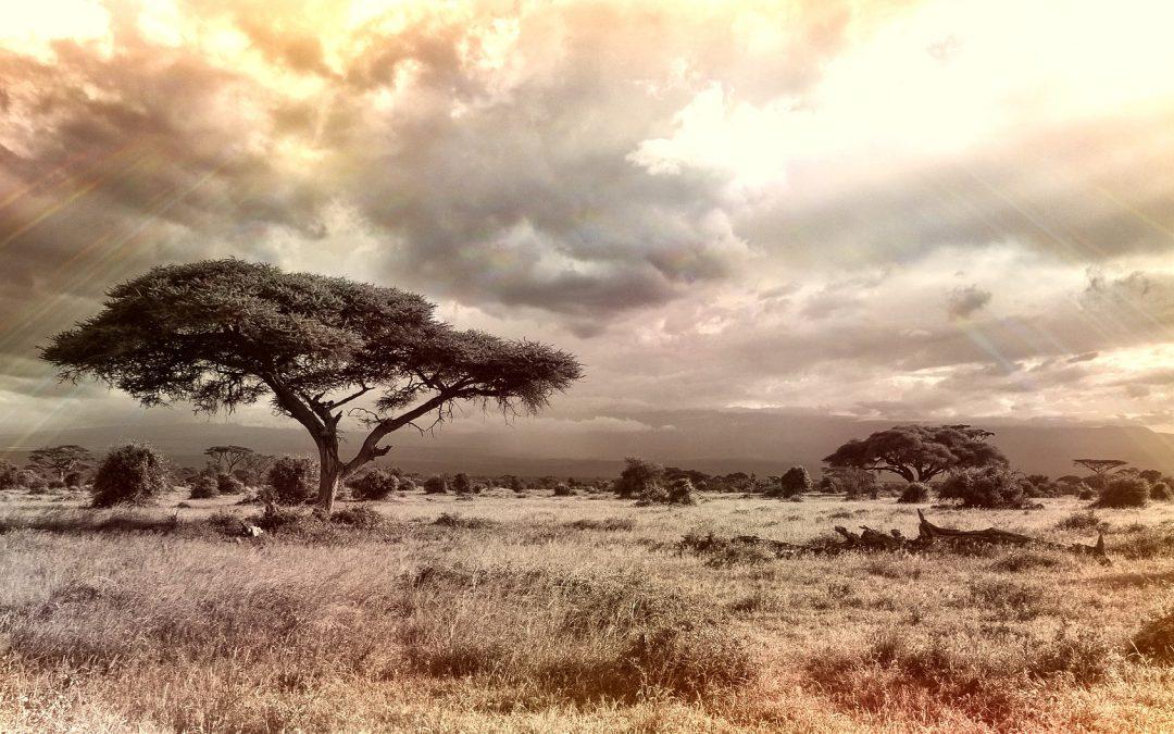 PAISAJES DESTACADOS: Sabana africana y otras sabanas del mundo