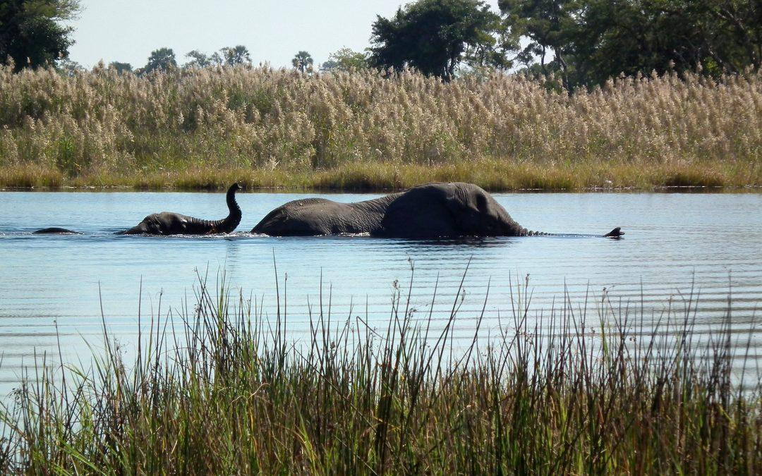 PAISAJES DESTACADOS:  El Río Okavango