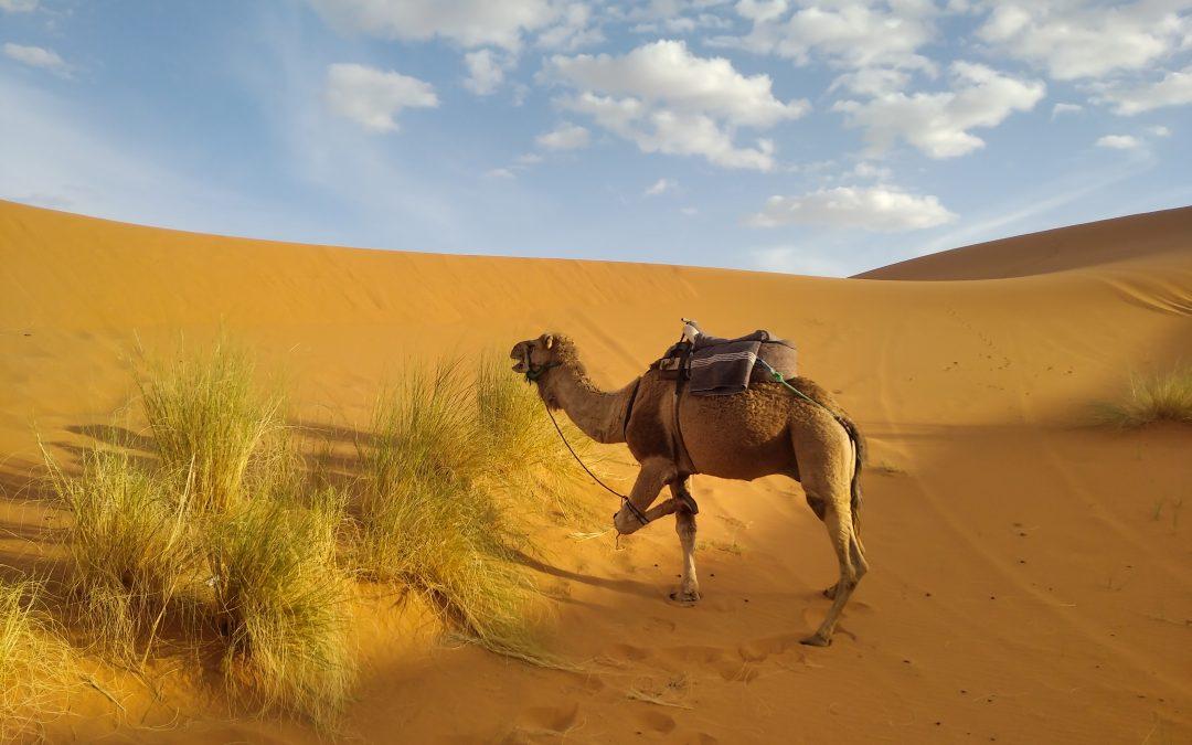 El mundo Árabe: Península arábiga